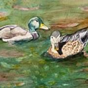 Mallard Ducks With Spawning Salmon Poster