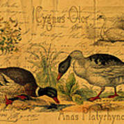 Mallards And Swan Collage Poster