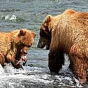 Mama And Baby Grizzly Bear At The Falls Poster