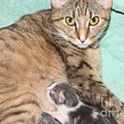 Mama Cat And Her Kittens Poster