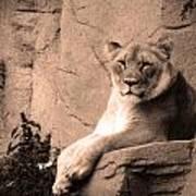 Mama Lion Poster