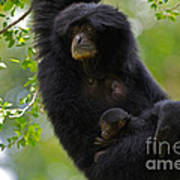 Mamas Hammock Poster by Ashley Vincent