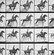 Man And Horse Jumping A Fence Poster by Eadweard Muybridge