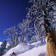 Man Skiing Through Trees In Fresh Poster
