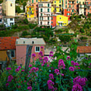 Manarola Flowers And Houses Poster