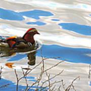 Mandarin Duck Poster