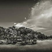 Mangrove At Low Tide Poster