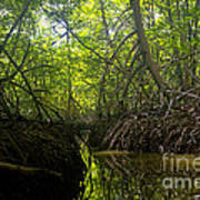 mangrove forest in Costa Rica 1 Poster