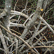 Mangrove Roots 1 Poster