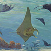 Manta Ray Poster by ACE Coinage painting by Michael Rothman