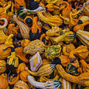 Many Colorful Gourds Poster