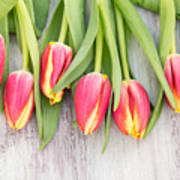 Many Spring Tulip Flowers On White Wood Table Poster