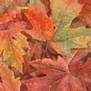 Maple Leaf Rag Poster