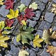 Maple Leaves On Stones Poster