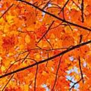 Maple Leaves Orange Yellows 2879 Poster