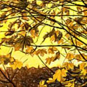 Maple Sunset - Paint Poster