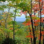 Maples Against Lake Superior - Tettegouche State Park Poster