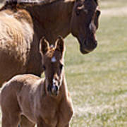 Mare And Foal   #0659 Poster