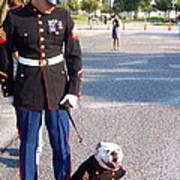 Marine And Bulldog Poster