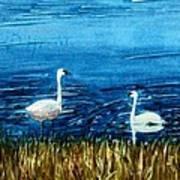 Marion Lake Swans Poster