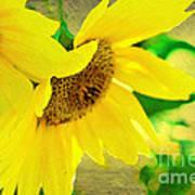 Mark Twain's Sunflowers Poster