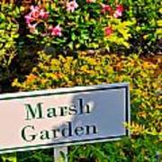 Marsh Garden Sign And Flowers Poster