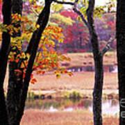 Marsh In Fall Poster