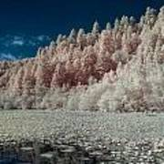 Marshall Pond In Infrared Poster