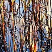 Marshgrass Poster
