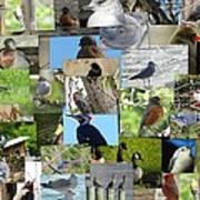 Maryland Birds Poster by Tom Ernst