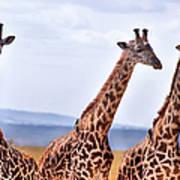 Masai Giraffe Poster
