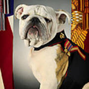 Mascot Of The United States Marine Corps Poster