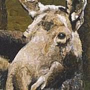 Mat-su Moose Poster