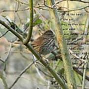 Mathew 6 Vs 26 Thrush Poster