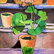 Matisse's Pot Of Geraniums Poster