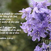 Matthew 6 Verses 28 And 29 Poster