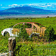 Maui Upcountry Rusted Car Poster