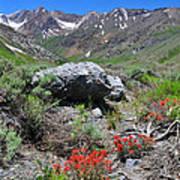 Mcgee Creek Wildflowers Poster