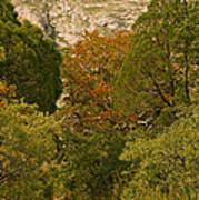 Mckittrick Canyon Trail Poster