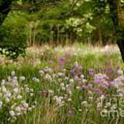 Meadow Wildflowers Poster