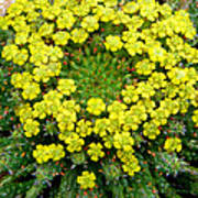 Medusa Succulent Flower Cluster Poster