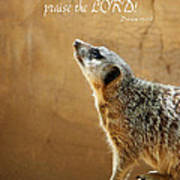 Meerkat Praise Poster by Methune Hively