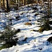 Melting Snow In A Forest In Late Winter Poster