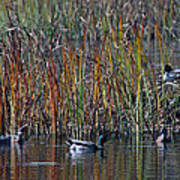 Menagerie Of Ducks Poster by Rhonda Humphreys