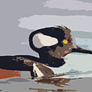 Merganser Reflections Poster