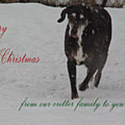 Merry Christmas Critters Hershey Poster