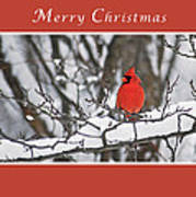 Merry Christmas Male Cardinal Poster