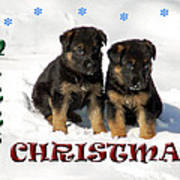 Merry Christmas Puppies Poster