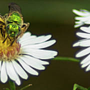 Metallic Green Wasp Poster