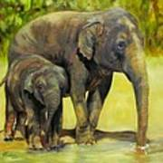 Thirsty, Methai And Baylor, Elephants  Poster